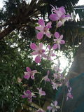 Stehende rosa Blumen Lizenzfreie Stockfotografie