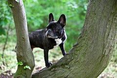 Stehender Hund stockbild