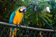 Stehender Papagei Lizenzfreie Stockfotografie