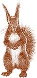 Stehendes Eichhörnchen Stockfotografie