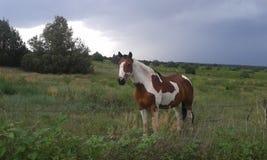 Stehendes Pferd lizenzfreie stockfotos