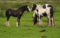 Stehendes Pferd drei Lizenzfreie Stockbilder