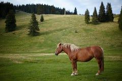 Stehendes Pferd getrennt Lizenzfreies Stockfoto