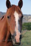Stehendes Pferd getrennt Stockfotos