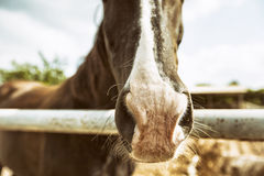 Stehendes Pferd getrennt Lizenzfreie Stockfotos