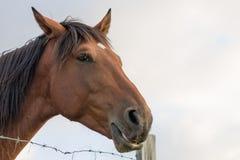 Stehendes Pferd getrennt Stockfoto