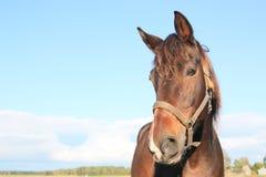 Stehendes Pferd getrennt Lizenzfreies Stockbild