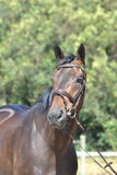 Stehendes Pferd getrennt Stockfotografie