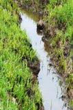 Stehendes Wasser in einem kleinen Abzugsgraben oder in einer Pfütze Lizenzfreie Stockfotografie
