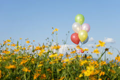 steigen Sie multi Farbe im gelben blauen Himmel des Blumenfeldes im Ballon auf Stockbild