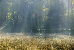 Steigender Dunst an einem Wald in Menz, Brandenburg, Deutschland Lizenzfreies Stockfoto