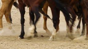 Steigender Staub der Pferdefüße stock footage