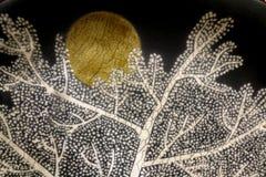 Steigender Vollmond hinter Baum Stockfotografie