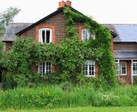 Steigendes Rosen-Land-Häuschen Stockbild