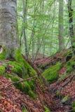 Steigerwald Forrest Zdjęcia Stock