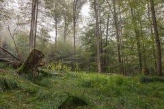 Steigerwald Forrest Zdjęcia Royalty Free