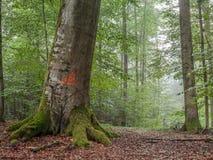 Steigerwald Forrest Fotografia de Stock