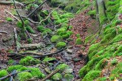 Steigerwald Forrest Zdjęcie Royalty Free