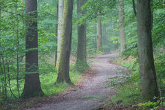 Steigerwald Forrest Royalty Free Stock Photography
