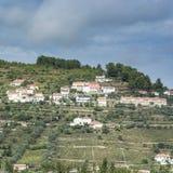 Steigungen umfasst mit Weinbergen in Portugal Stockfoto