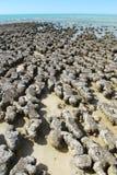 Steil Punt, Meest westelijke Punt, Haaibaai, Westelijk Australië stock afbeeldingen