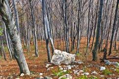Steil terrein in een dicht bos met een paar rotsen bij Homolje-bergen stock foto