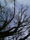 Steile de Winterboom Royalty-vrije Stock Afbeeldingen