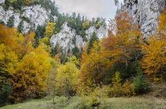 Steile Felsenwände und Herbstfarben in Zarnestiului sättigen sich stockbild