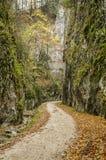 Steile Felsenwände in Zarnestiului-Schlucht stockfoto