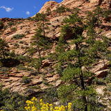 Steile helling en naaldbomen Royalty-vrije Stock Foto