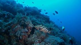Steile helling van een koraalrif stock footage