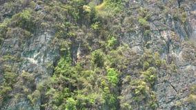 Steile hellingen van het eiland Blauwe hemel en een witte wolk Het eiland is bedekt met vegetatie, groene struiken stock video