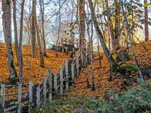 Steile houten treden in het de herfstbos van Gauja-riviervallei, Sigulda, Letland royalty-vrije stock afbeeldingen