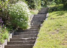Steile konkrete Schritte in einem Garten in Wellington, Neuseeland Eins der Vergnügen des Lebens an der Spitze eines steilen Hang lizenzfreies stockbild