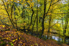Steile Steigung umfasst mit gefallenen Blättern von den Bäumen Stockbilder