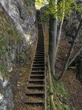 Steile treden in het Sloveense bos stock afbeelding