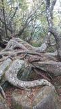 Steile Tuinen royalty-vrije stock afbeeldingen