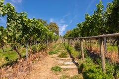 Steiler Weg mit steigert einen schönen Weinberg nahe Birnau auf Bodensee stockfoto