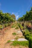 Steiler Weg mit steigert einen schönen Weinberg nahe Birnau auf Bodensee lizenzfreies stockbild
