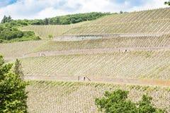 Steiler Weinberg auf Fluss Mosel Lizenzfreies Stockbild