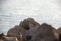 Stein auf dem Enisey lizenzfreie stockfotos