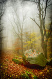 Stein, Bäume und Nebel Lizenzfreie Stockfotos