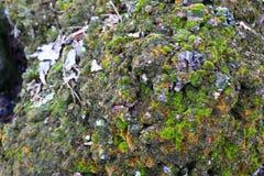 Stein bedeckt mit grünem Moos Ungewöhnlicher Stein Stockbild
