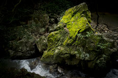 Stein bedeckt mit Moos 1 Stockfotos