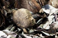 Stein-Buddha-Kopf auf alten Blättern Stockfotos