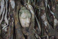Stein-Buddhas Kopf entwirrt in den Baumwurzeln Stockfotos