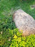 Stein in der weißen Blume des Gartens und purpurrotem in Blume laef grün stockfotografie