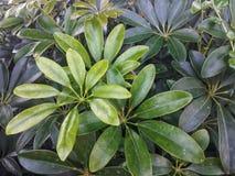 Stein in der weißen Blume des Gartens und purpurrotem in Blume laef grün lizenzfreies stockbild