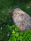 Stein in der weißen Blume des Gartens und purpurrotem in Blume laef grün lizenzfreie stockbilder