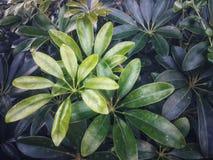 Stein in der weißen Blume des Gartens und purpurrotem in Blume laef grün stockbild